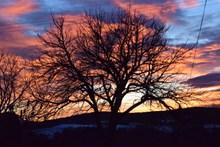 黄昏枯树剪影图片素材