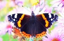 唯美彩色蝴蝶图高清图片