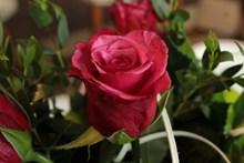浪漫红色玫瑰花朵图片大全