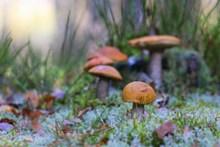 森林野蘑菇图片大全