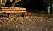 秋季森林休息椅图片