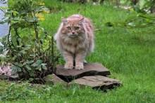 森林猫野猫图片大全