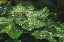 绿叶上的露珠精美图片