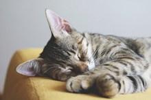 软萌猫咪睡觉图片