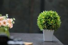 桌面小盆栽植物高清图片