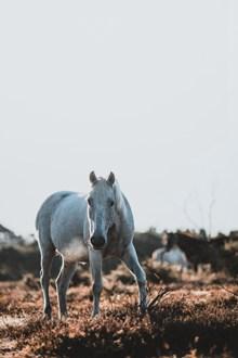 高清白色骏马高清图
