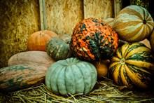 秋季南瓜收成图片
