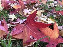 地面红色落叶高清图