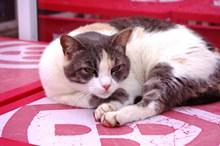 黑白宠物猫高清图
