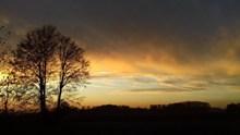 黄昏天空树木剪影图片下载
