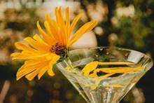 水培植物菊花图片素材