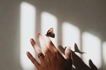 蝴蝶落在手上的高清图