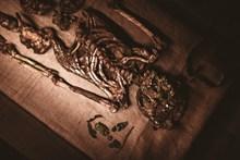 人体骨架标本图片大全