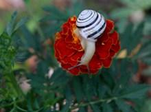 花朵上的小蜗牛图片素材