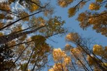 鸟瞰秋季森林树木图片下载