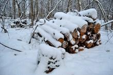 森林雪地木材堆高清图