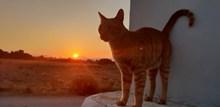黄昏下的小猫高清图