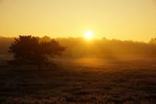清晨雾气日出高清图