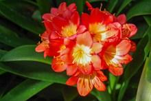 漂亮红色花朵高清图片