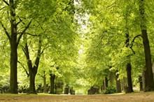 公园绿色树木图片大全