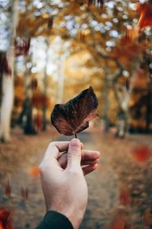 手拿叶子的图片素材
