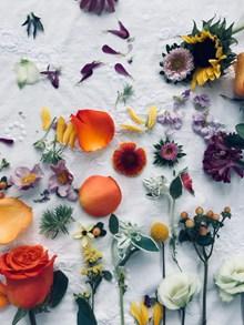 花朵高清背景素材图片下载