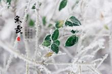 冬至节气高清图