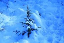 冬天积雪景观图片下载