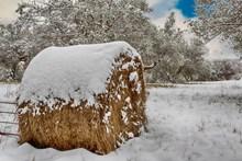 冬天雪地干草垛图片