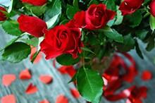 浪漫鲜红玫瑰花图片下载