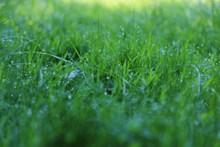 清晨绿草地背景图片下载