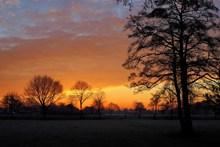 冬天黄昏树木剪影高清图