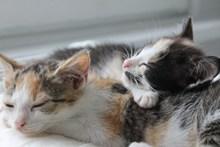 两只熟睡小猫图片大全