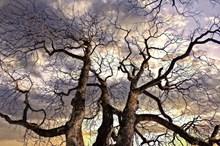 秋天枯树木高清图片