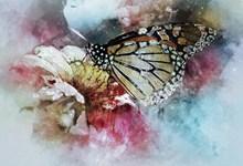 蝴蝶绘画精美图片