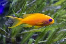 水族馆金黄色小鱼图片下载