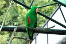可爱翠绿色鹦鹉图片大全