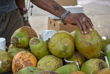 泰国椰子精美图片