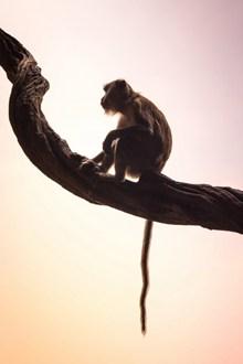 可爱野生猕猴精美图片