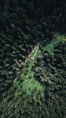 茂盛松树林航拍图图片素材