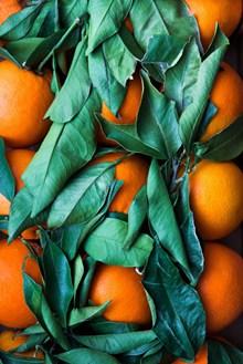 水果橙子高清图