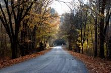 秋季森林公路景观图片大全
