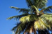 棕榈树局部图片大全