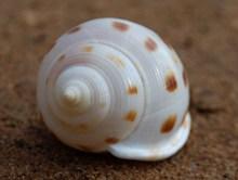 漂亮螺旋贝壳高清图