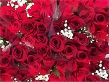 玫瑰鲜花背景图片大全