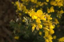 黄色小花朵摄影图片素材