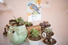 室内绿植盆栽图片