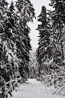 冬季森林积雪雪景精美图片