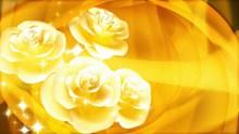 黄色玫瑰背景图片素材