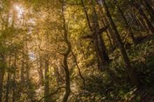 深山茂密树林高清图片